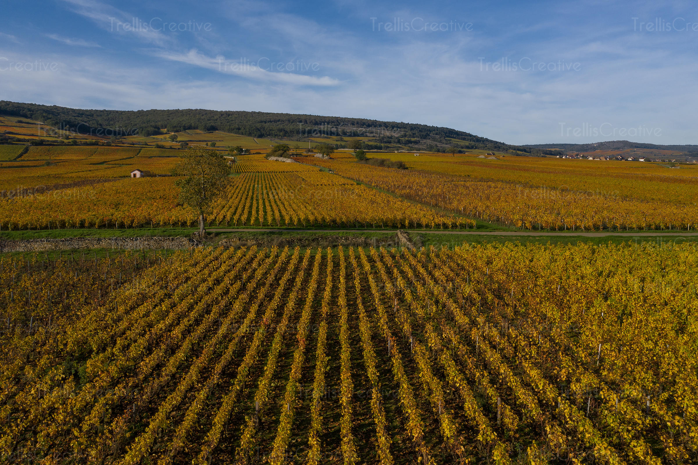 An aerial photograph of the colorful vineyards in Burgundy, France in autumn