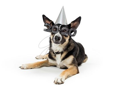 Cute New Year 2020 Party Dog