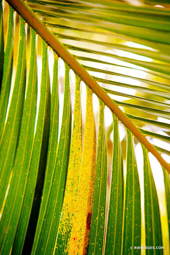 PALM TREE LEAF KEY WEST FLORIDA BOTANICAL COLOR VERTICAL