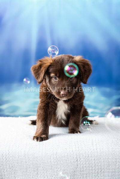 Brown Puppy Surrounded by Bubbles