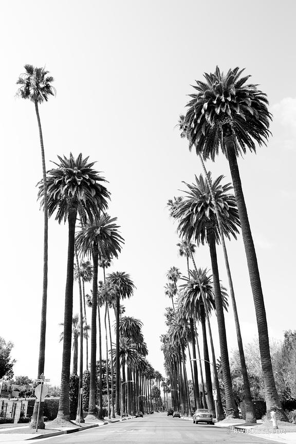 BEVERLY HILLS STREET BEVERLY HILLS CALIFORNIA BLACK AND WHITE VERTICAL