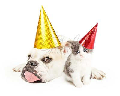 Funny Bulldog Laying With Kitten Wearing Party Hats