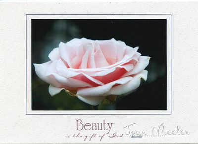 greeting_cards291