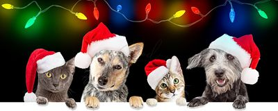 Christmas Celebration Dogs and Cats Over Web Banner