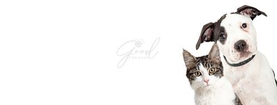 Dog and Cat on Side of White Web Banner