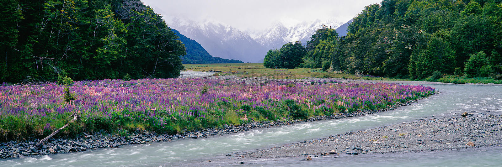 Eglinton River Flowing by Meadow filled with Lupinus perennis,