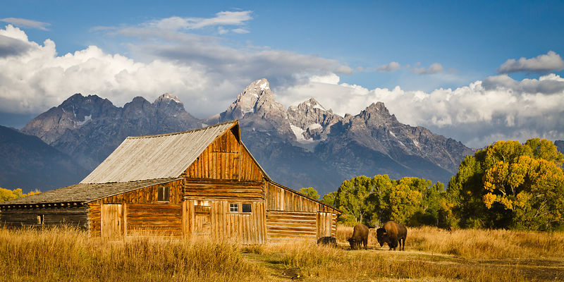 Bison and Mormon Barn