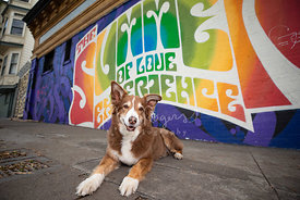 Brown and White Dog Near 60s Mural in Haight Ashbury