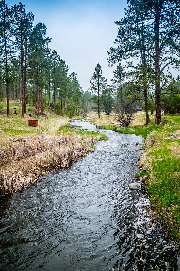 The French Creek in Custer State Park, South Dakota