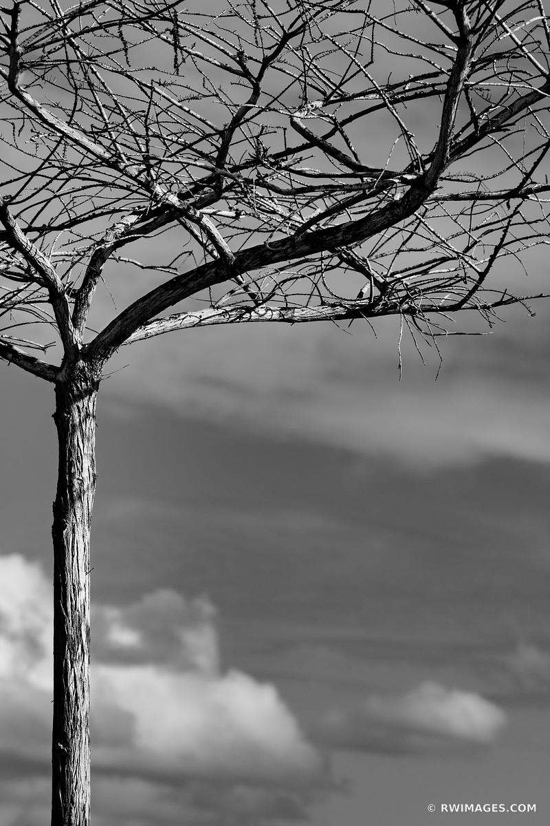 SKELETON FOREST TREE EVERGLADES FLORIDA BLACK AND WHITE VERTICAL