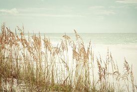 Beach Sea Oats Grass Pensacola Florida Beachscape Retro Photo