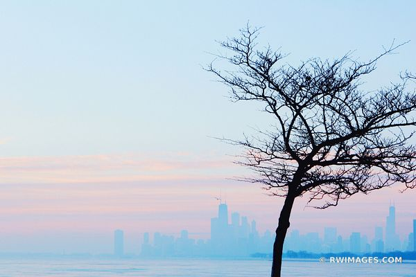 BLUE CHICAGO COLD WINTER MORNING CHICAGO SKYLINE WITH BARE TREE