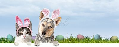 Cat and Dog Easter Scene Web Banner