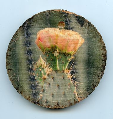 cactus_small_wood_