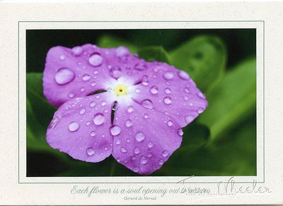 greeting_cards287