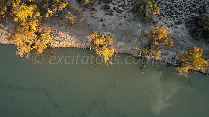Aerial of old trees on riverbank, Great Darling Anabranch.