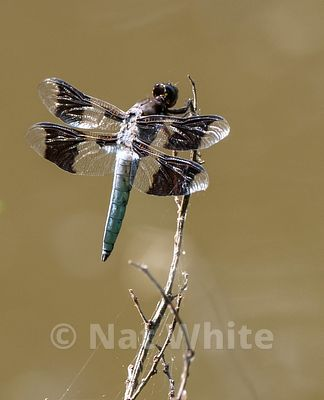 Dragonfly-Filename_number_suffix-_1May_19_2019_NAT_WHITE