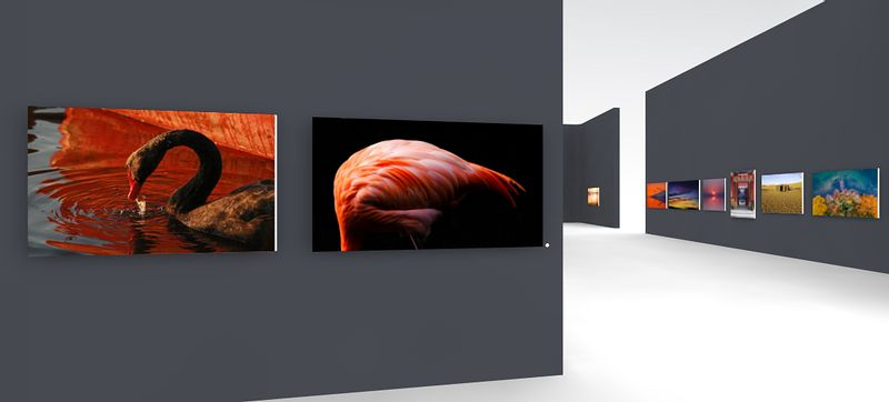 Moments of color virtual exhibition