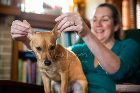 Woman Playing with Her Small Dog's Ears