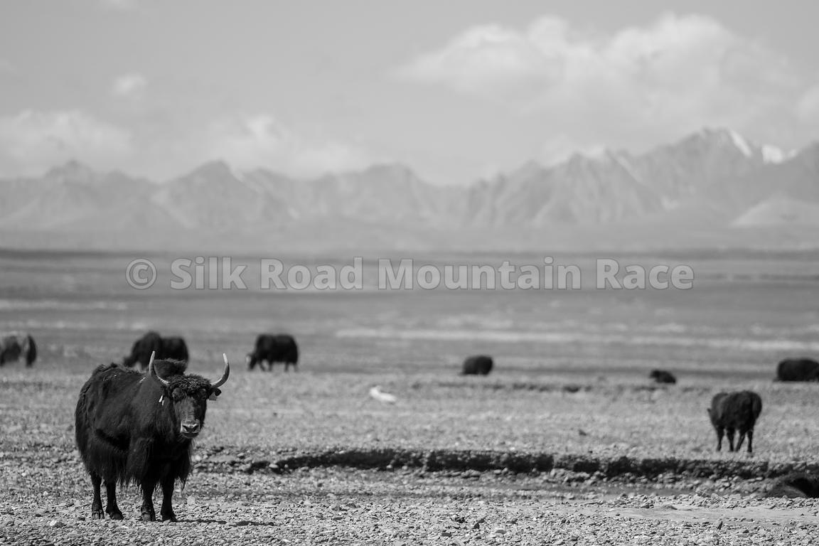 SILKROAD_2019_DAY_5_114