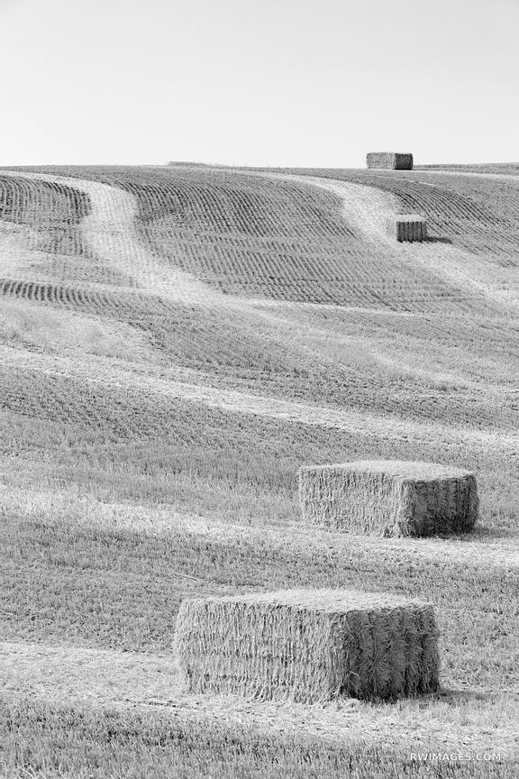 HAY BALES SUMMER HARVEST PALOUSE WASHINGTON BLACK AND WHITE VERTICAL