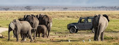Elephants in Amboseli With Safari Vehicle