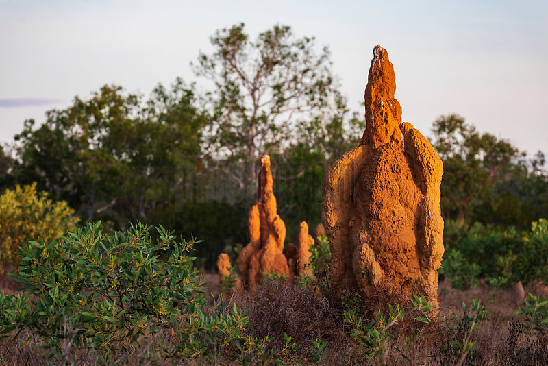Termite Mounds at Sunset