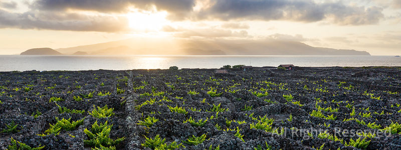 Aerial Image Showing a Beautiful Sunset Over the Typical Vineyard Culture (viticulture) Landscape of Pico Island at Criacao V...