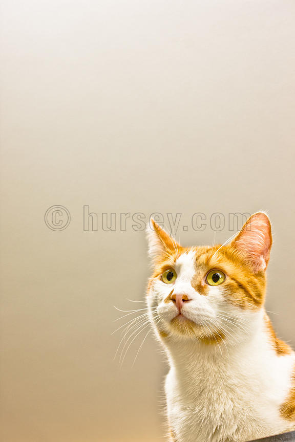 DH_Cats-0831