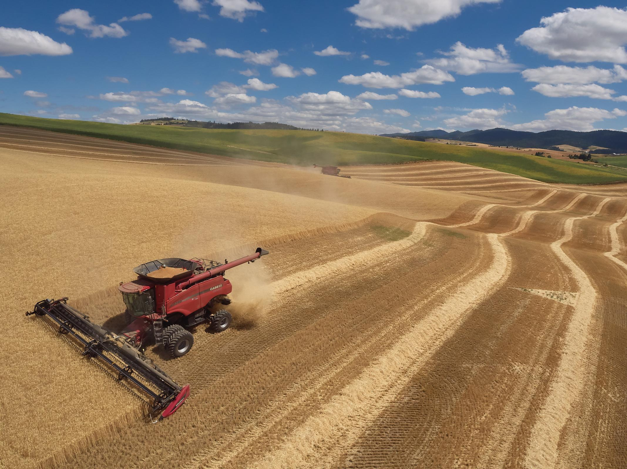 Droen aerial photograph of wheat harvest