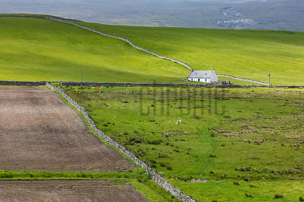 A View of Fields and Drystone Walls from the Road around the Kyle of Tongue
