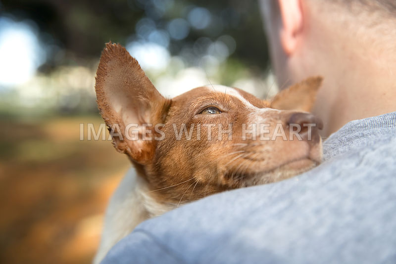 Pup being held resting head on man's shoulder