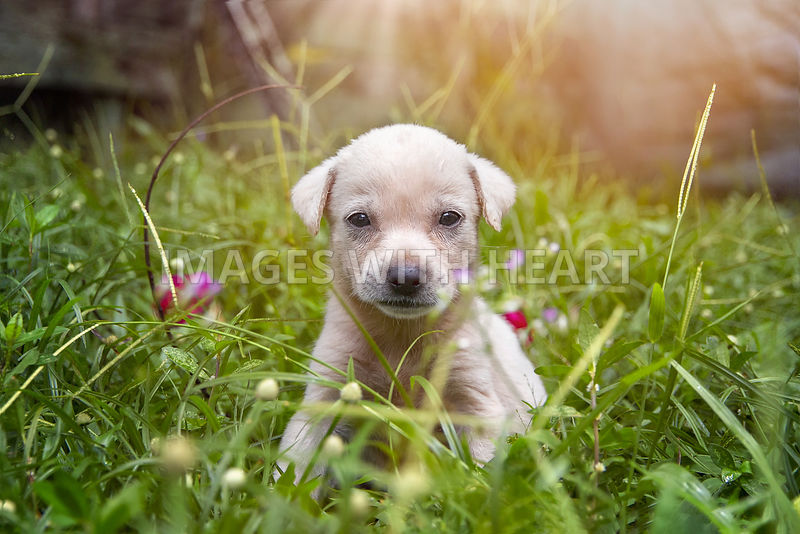 Cute Puppy Sitting in grass in Sunshine
