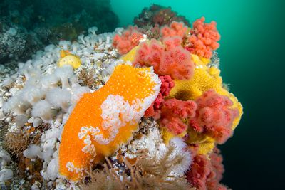 Orange Peel Dorid