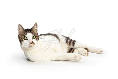Cute Cat Lying Side Lifting Head