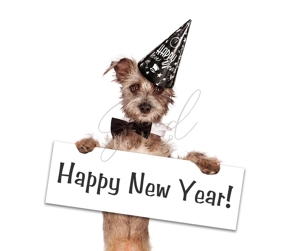 Terrier Dog New Years