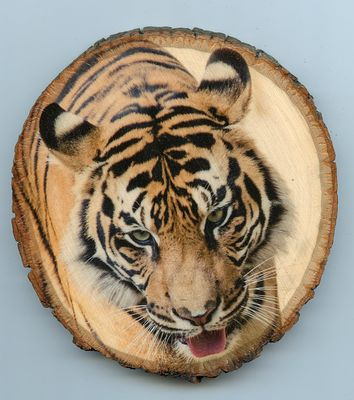 Tiger_medium_wood