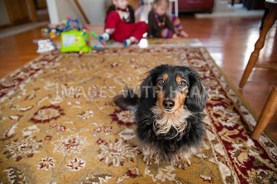 Dog Looking at Camera with Kids in Backgroun