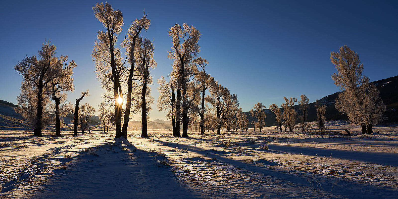 Frozen Cottonwoods Panorama