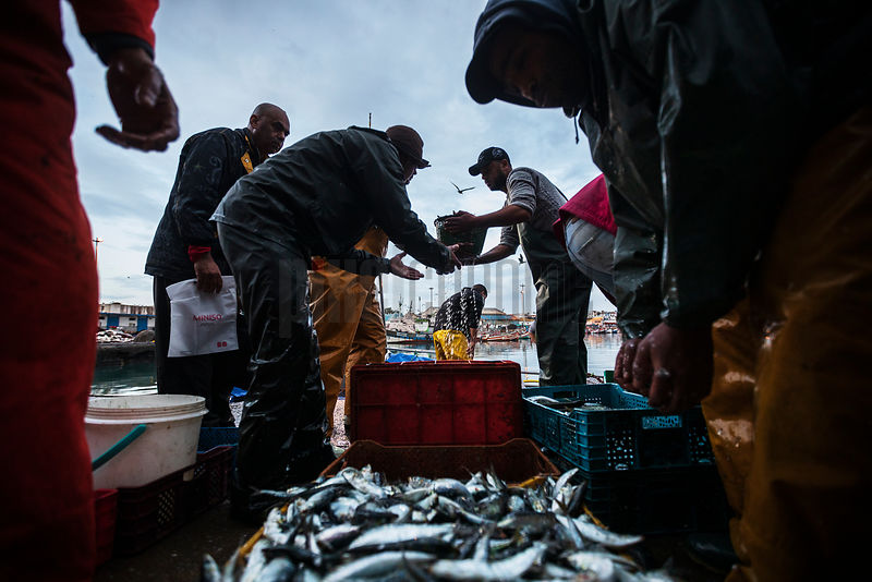 Fishermen Unloading Freshly Caught Sardines at the Porte de Pêche (Fishing Port)