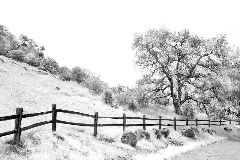 COUNTRY ROAD NAPA VALLEY BLACK AND WHITE