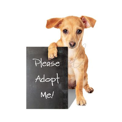 Small Crossbreed Dog Holding Adopt Me Sign