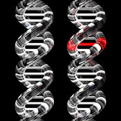 DNA Mutation Glassy Normal and Mutated Double Helices
