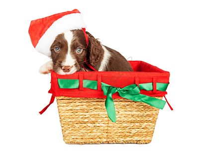 Santa Puppy in Christmas Basket