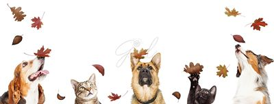 Dogs and Cats With Falling Autumn Leaves