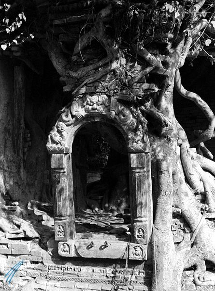 Archway and tree roots