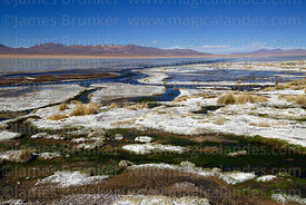 Salt deposits and bofedales on shore of Laguna Chalviri, Eduardo Avaroa Andean Fauna National Reserve, Bolivia