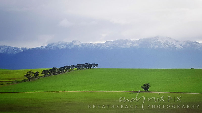 One tree and a row, green field and snow