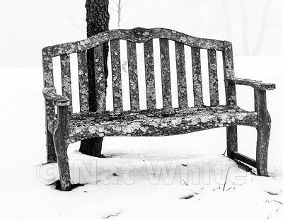 RC_lichen_chair_B_W-3370_December_21_2020_NAT_WHITE