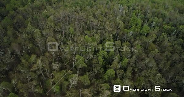 Looking down through tree canopy from above reveals mountains, North Carolina, USA
